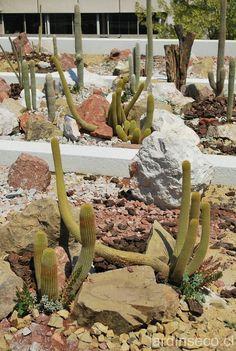 Ideas para decorar un jardn seco con piedras y cactus Adobe