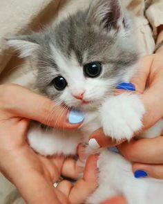 Baby Animals Super Cute, Cute Baby Cats, Cute Cats And Kittens, Cute Little Animals, Baby Animals Pictures, Cute Animal Videos, Cute Animal Pictures, Funny Cute Cats, Cute Funny Animals