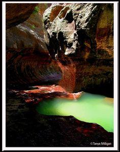 Zion National Park by cristina
