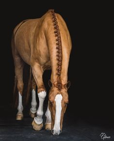 - Art Of Equitation All The Pretty Horses, Beautiful Horses, Animals Beautiful, Cute Horses, Horse Love, Horse Photos, Horse Pictures, Horse Braiding, Majestic Horse