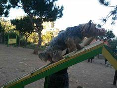Juegos en el parque canino  06/16