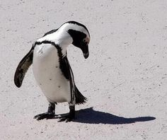 Penguin .. There's something following me and it won't leave me alone.