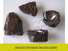 Αποτέλεσμα εικόνας για Dracaena cinnabari seeds