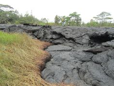 An HVO geologist walks across the surface of the flow, which covers the short access road to the cemetery. As is typical for pāhoehoe, the flow has inflated over the past day was chest high in many places. (USGS HVO)