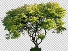 texture plant foliage tree leaves vegetation