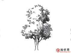 . Tree Pencil Sketch, Tree Drawings Pencil, Ink Pen Drawings, Realistic Drawings, Pen Sketch, Landscape Architecture Drawing, Landscape Sketch, Landscape Drawings, Plant Sketches
