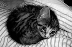 Kitten all curled up!