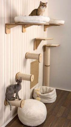 32 ideas diy dog furniture fit - Cat Accessories - Informations About 32 ideas diy dog furniture fit Cat Climbing Wall, Cat Wall Shelves, Dog Furniture, Furniture Ideas, Cheap Furniture, Furniture Websites, Furniture Dolly, Inexpensive Furniture, Diy Cat Tree