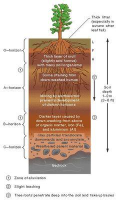Soil Profile                                                                                                                                                                                 More