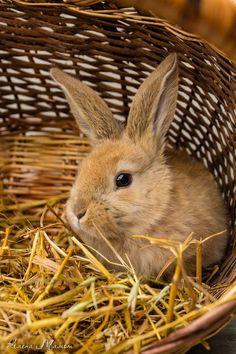 Little hare in a basket