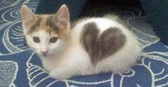 ネコが飼い主に『大好き』を伝える13のサイン