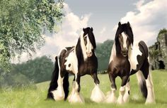 Free Gypsy Vanner Horses | Pair of beautiful Gypsy Vanner Horses Counted Cross Stitch Pattern