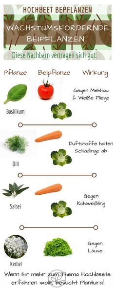 Hochbeet bepflanzen: Fruchtfolge und schädlingsvertreibende Pflanzen. Das solltet Ihr beachten! #Tipps #Garten