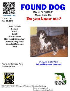 Found Dog - Shih Tzu - Miami, FL, United States
