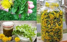 Here's How To Prepare Dandelion Tea And Syrup And Treat Cancer, Hepatitis, Liver, Kidneys, Stomach And Many More! Healthy Cholesterol Levels, Reduce Cholesterol, Cholesterol Diet, Fat Cutter Drink, Green Tea Diet, Kidney Disease, Heart Disease, Kidney Infection, Kidney Failure
