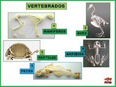 El Monstruito en Monteagudo: Los animales: Clasificación.
