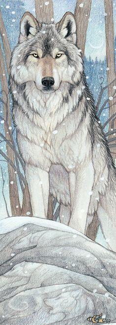 Wolf coloured pencil drawing