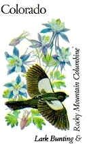 Colorado State Bird - Lark Bunting - Large Sparrow AND Colorado State Flower - White & Lavender Columbine