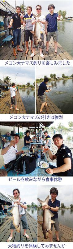 先日会社仲間でツアーに申し込まれたお客様をメコン大ナマズ釣りツアーにご案内しました。この釣り堀はバンコクから1時間ほどの郊外にありますが、ツアー客用の釣り堀というより、タイの一般釣り客が釣りを楽しむ釣り堀です。 休憩施設、レストランなどはツアー用の場所のように完備はされていま...