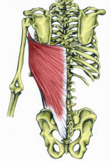 Shoulder Joint including Chest Muscle LATS (LATISSIMUS DORSI)  What It Is - How to Stretch It - How to Strengthen It
