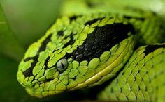 anaconda wallpaper free download