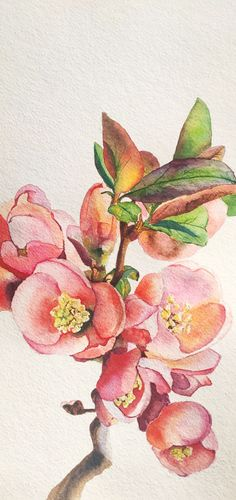 Айва японская. Акварель, бумага Apricot Blossom, Painting, Art, Art Background, Painting Art, Kunst, Paintings, Performing Arts, Painted Canvas