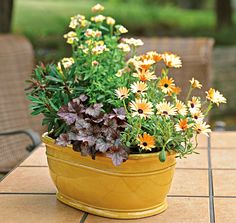 Not sure where to start with a fall container design? Take a cue from the container by echoing or contrasting with its color. Or do both. The Nemesia 'Sunsatia Mango' and Osteospermum echo the pale hue of the pot while Heuchera 'Amethyst Mist' and Euphorbia 'Efanthia' bring contrast.