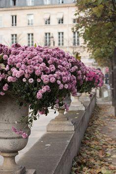 Paris Photography, Purple Mums in Jardin du Luxembourg, Fall leaves in Paris, Paris Decor, Fall Photography