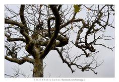 [2012 - Ribeiro Frio - Madeira - Portugal] #natureza #naturaleza #nature #fotografia #photography #foto #photo #europa #europe  #arvore #arvores #arbol #arboles #tree #trees @Visit Portugal @ePortugal