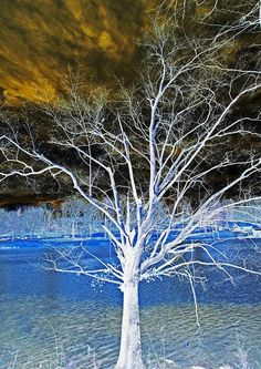✯ Magical Tree