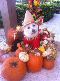 Happy Halloween 2016❤❤❤