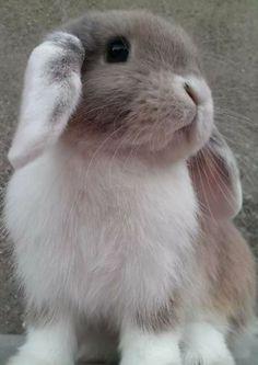 This is Stefan Salvatore guys 😂😂😂 Cute Baby Bunnies, Funny Bunnies, Super Cute Animals, Cute Little Animals, Animals And Pets, Funny Animals, Mini Lop, Fluffy Bunny, Tier Fotos