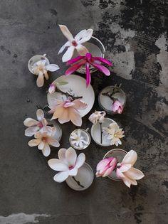 Sanctuary: magnolia