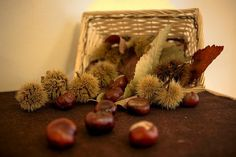 Remedii naturiste împotriva varicelor cu castane