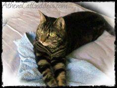 Athena, Cat Goddess: Easy Like Sunday