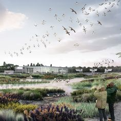 McGregor Coxall has won a competition to design a wetland sanctuary in Tianjin, China, offering migrating birds a stopover to fatten up and breed.