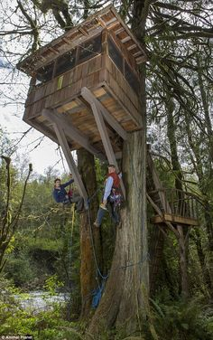 Pete Nelson (right) and his son, Charlie, finish up a treehouse on Animal Planet's Treehouse Masters. The series airs at 9 p. Beautiful Tree Houses, Cool Tree Houses, Treehouse Ideas, Building A Treehouse, Treehouse Masters, Tree House Plans, Woodland House, Tree House Designs, Home Plans