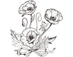 44 Mejores Imagenes De Dibujos De Flores Para Colorear Daffodils