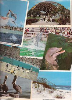 Retro Florida Tourists Florida Tourist Attractions, Gas Pipeline, Vintage Florida, Sea World, 50 States, Travel Stuff, Vintage Travel, Vintage Postcards, Vacation Trips