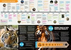 Ending Trade in Tiger Parts and Products  An introduction to the key facts and figures of the captive tiger issue.