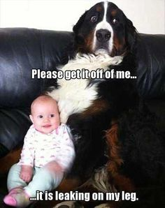 Funny Animal Pictures Of The Day – 28 Pics