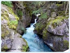 Trail of Cedar, Glacier National PArk #findyourpark #glaciernp #montana