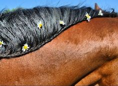 Plaited mane with flowers