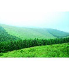 【shun033】さんのInstagramをピンしています。 《「霧の高原 ~2016 夏の霧ヶ峰その12」 Kurumayama-kogen Highlands in the fog / Kirigamine,Chino city,Nagano,Japan  おはようございます。 先月末に撮ってきた霧ヶ峰シリーズの続きです☆  八島ヶ原湿原へ向かうバスの車窓からの眺めをもう1枚。 この日はずっと霧に包まれていた霧ヶ峰ですが、比較的見晴らしのいい場所もありました。  #高原 #霧ヶ峰 #長野 #NAGANO #japan #山 #mountains #森 #forest #nature  #癒し #長野県 #茅野市 #green #緑 #fog #rain #tree #jp_views2nd  #pics_jp #gf_japan #lovers_nippon #photo_jpn #japan_art_photography #nature_perfection #world_bestnature #Addictedto_ #tree_magic…