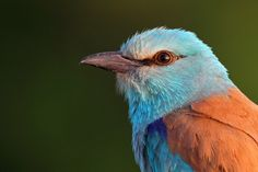 Bird photography hides Hungary-Tower Hide | EcoTours Wildlife Holidays