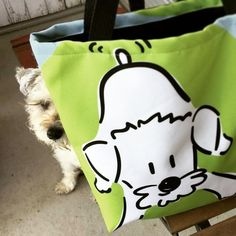 """Muso the schnoodle posing with his """"let's play!"""" tote bag designed by jojopowpow 