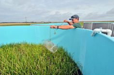LSU Ag Center continues research to figure out science of crawfishing - (This article first ran in the Louisiana Farm and Ranch Magazine this month) Unlike other crops crawfish farming is difficult because it is often difficult to determine if thi...