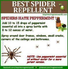 Spider repellent