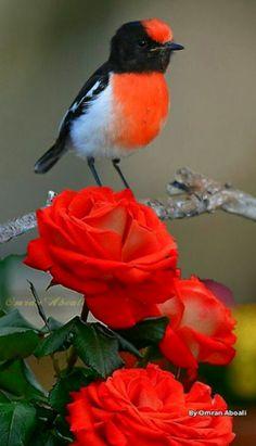 Tão belo quanto a rosa.