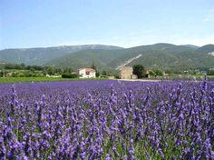 """Musée de la lavande. La ferme """"le Château du Bois"""" situé à Lagarde d'Apt - Vaucluse, Provence. Provence, Travel Around The World, Around The Worlds, France Travel, Really Cool Stuff, Lavender, Places To Visit, Pure Products, Places"""